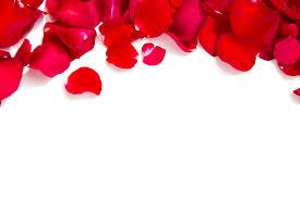 rose for lips