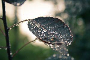 Rainy season problems
