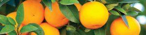 orange juice for pores