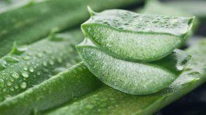 Aloe vera as facial oils